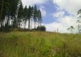 Hora Živčák 2011
